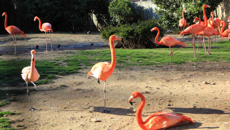 Why Flamingos are the Most Interesting Birds in the World